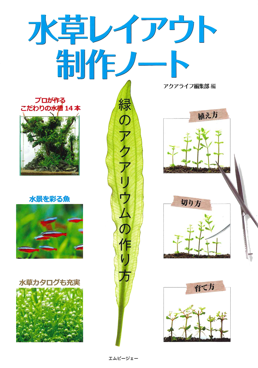 水草レイアウト制作ノート