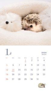 ハリネズミ カレンダー 2020