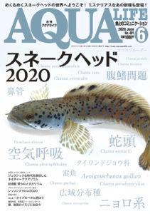 月刊アクアライフ2020年6月号画像